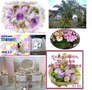 oiwai_20080210122810.jpg