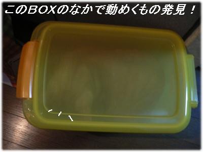 1228864970567409_P1010783(BOX).jpg