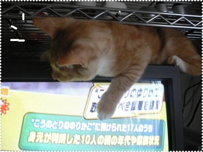 P1010095(テレビ)