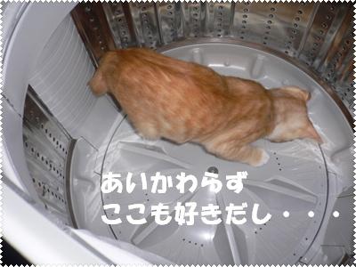 P1000781(洗濯機