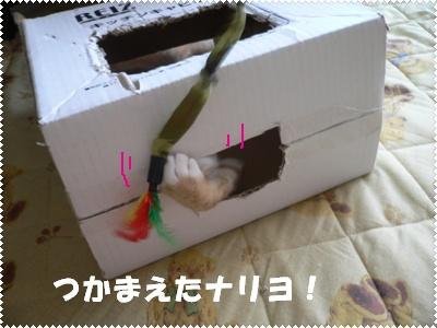 P1010195(じゃらし&箱)2