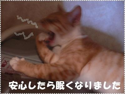 1222124772029807_P1010272)(眠く)