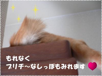 1222643095730034_P1010245(しっぽ)