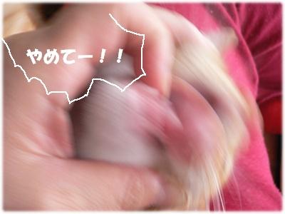 1223040036138948_P1010366(乳歯3)