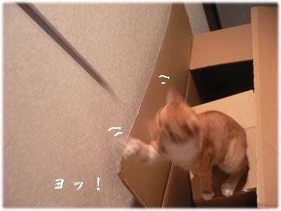 1223245048736276_P1010333(よ!)
