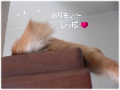 1223456270016447_P1010245(ぷりちぃしっぽ)