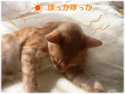 1223888807473352_P1010431(ぽっか ぽっか