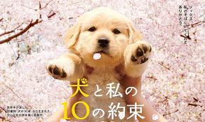 犬と私の10の約束3
