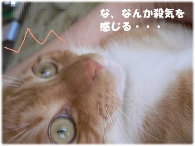 1224216370231787_P1010498(殺気