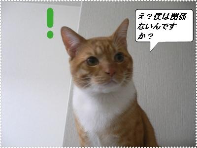 1228257051639438_P1010760(レイ1)