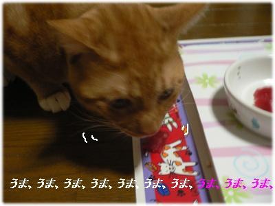 1230109448423830_P1010822(うまうま)