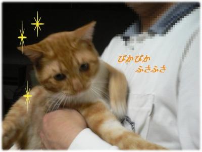 1230594387602110_P1010851(ぴかぴか ふさふさ)