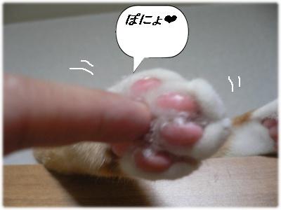 1230594762879430_P1010856(ぽにょ)