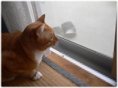 _P1020032(窓辺)