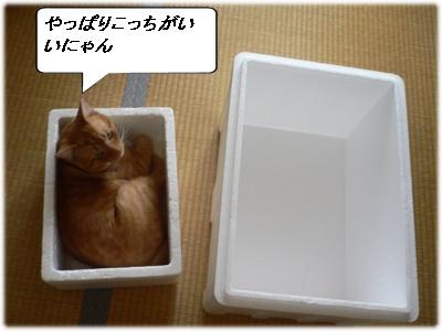P1010900(やっぱり・・・)