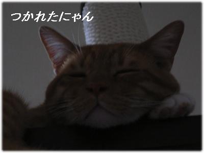 _P1020061(疲れたにゃ)