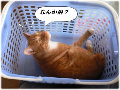 _P1020079(なんか用?)