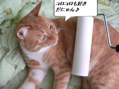 _P1020135(1).jpg