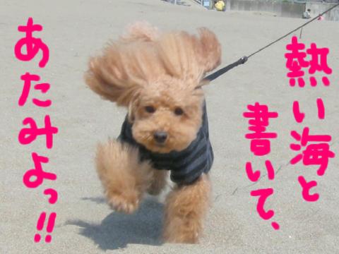 熱い犬と書いて、倫!!