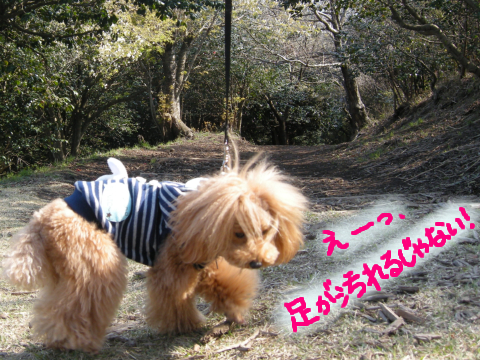 ケモノ道は好きになれない姫系な毛モノ。