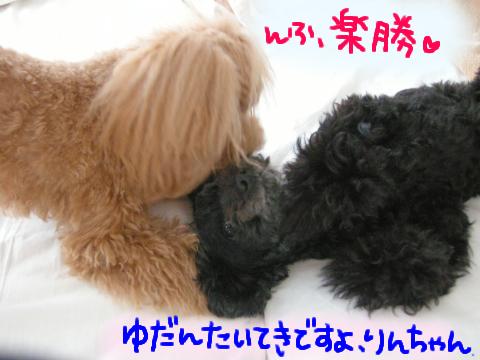 虎視眈々、…いや、犬視眈々な野愛。