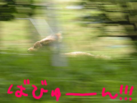 森の中を疾風のごとく駆け抜ける…バンビ?