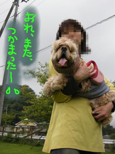 犬付き合いが苦手な犬は捕獲されます