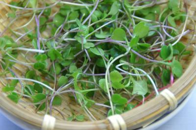 サプリ菜収穫1