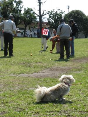 ゲートボール観戦20090327-2