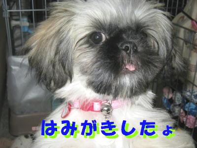 歯磨きヾ(゜ロ゜;)ノ す・・・すごい!