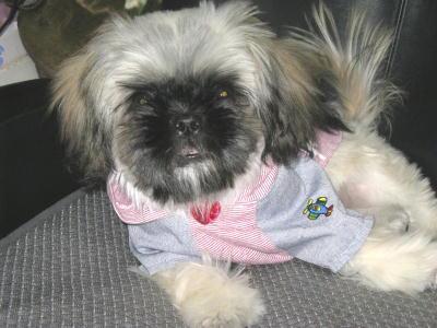 ママの古着de犬服20081116-2