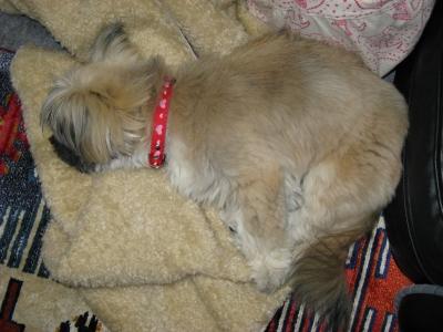 お気に入りの毛布で寝てます1