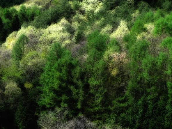 IMG_0976 のリサイズ画像