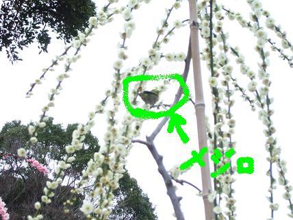 2007_02250077.jpg