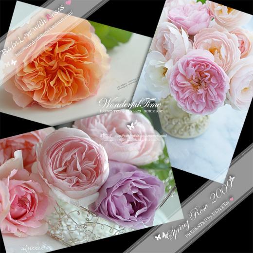 Spring Rose 2009♪♪