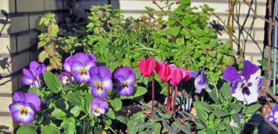 玄関のお花達