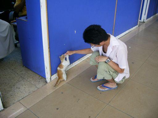 子猫と戯れる