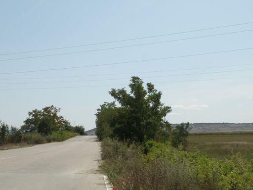 村への一本道