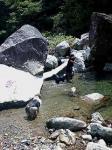 oyogimakuri