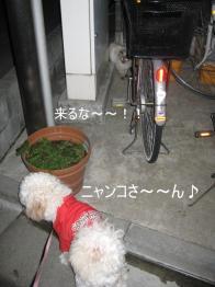 20090228_001.jpg