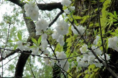 2006_0515-3.jpg