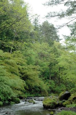 2006_0515-5.jpg