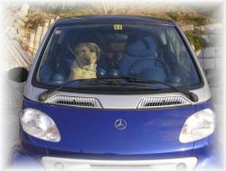 助手席に飼い犬