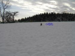 雪の中のラム