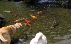 鯉とラムルイ