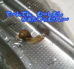 かたつむり1