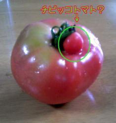 チビッコトマト