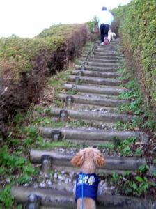 シアン階段