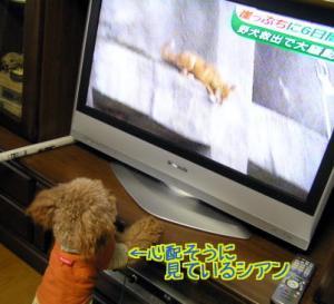 崖っぷち犬