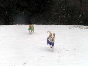 1.7雪1
